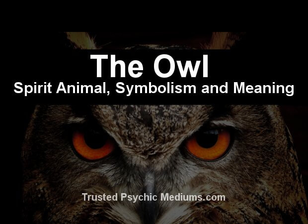 The Owl Spirit Animal A Complete Guide To Meaning And Symbolism