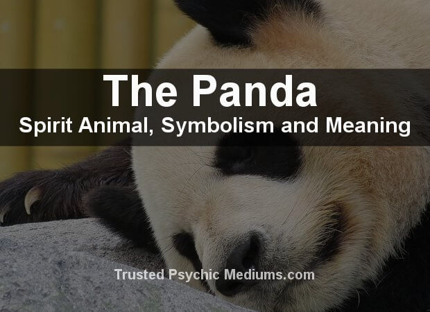 The Panda Spirit Animal