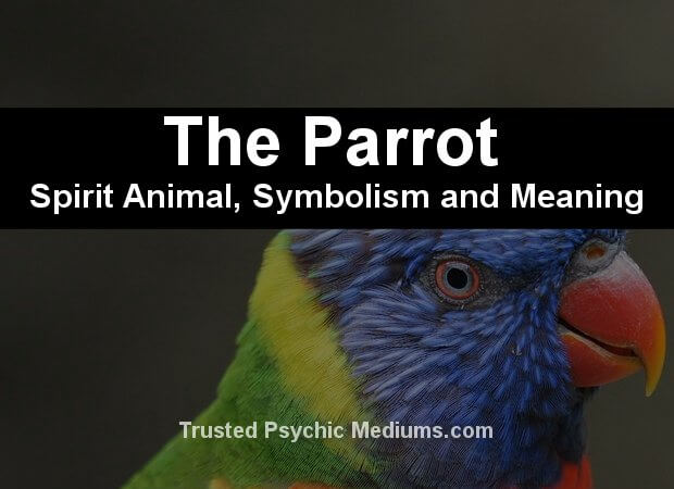 The Parrot Spirit Animal