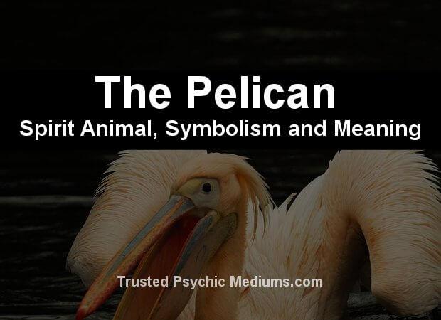pelican spirit animal
