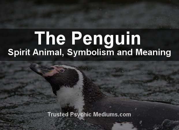 Penguin Spirit Animal