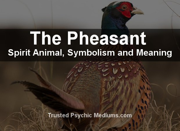 Pheasant Spirit Animal