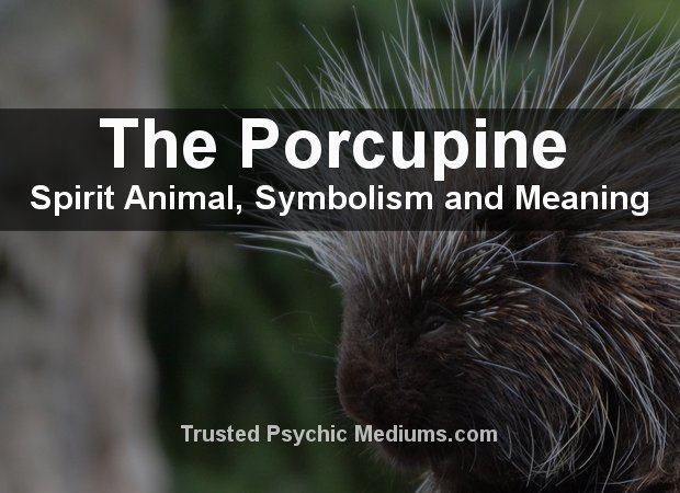 Porcupine Spirit Animal