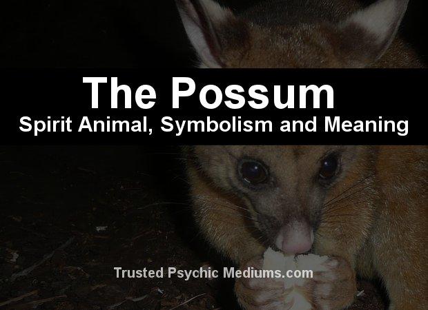 oppossum spirit animal