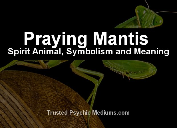 praying mantis spirit animal