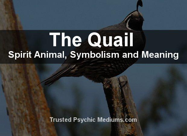 Quail Spirit Animal