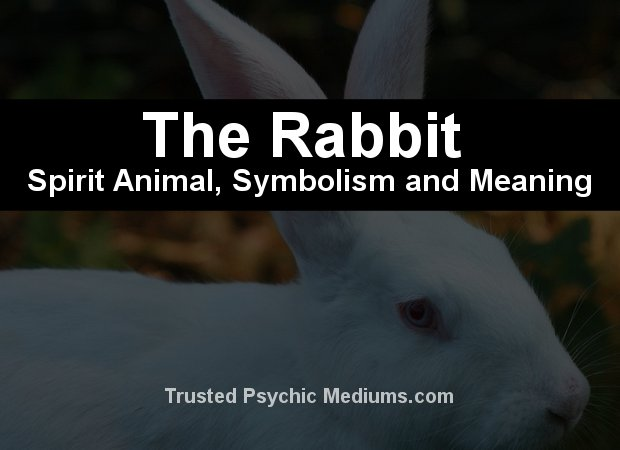 Rabbit Spirit Animal