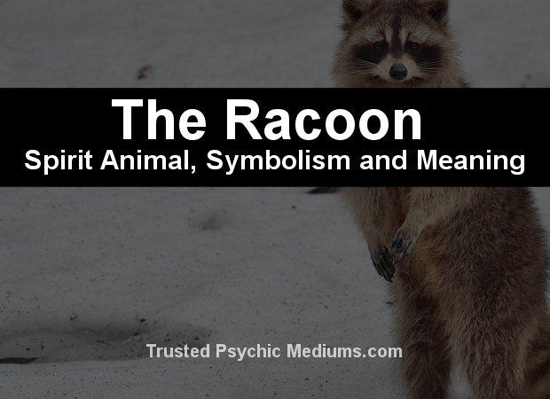 raccoon spirit animal meaning