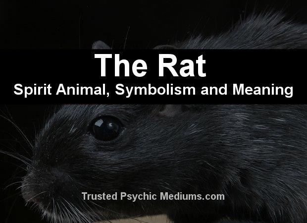 Rat Spirit Animal
