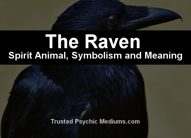 The Raven Spirit Animal