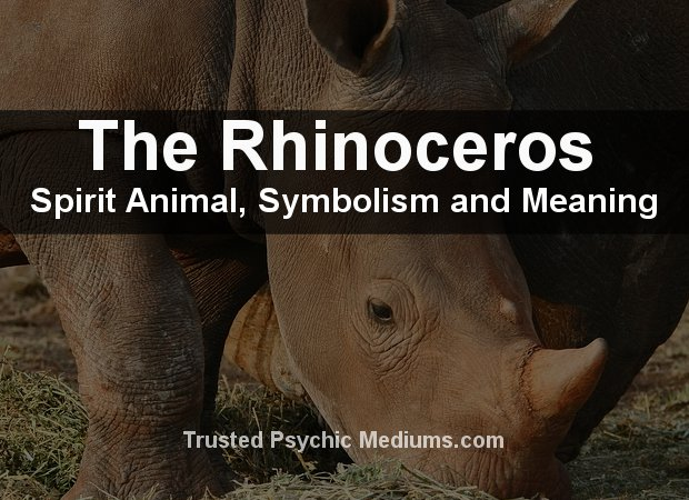 Rhinoceros Spirit Animal