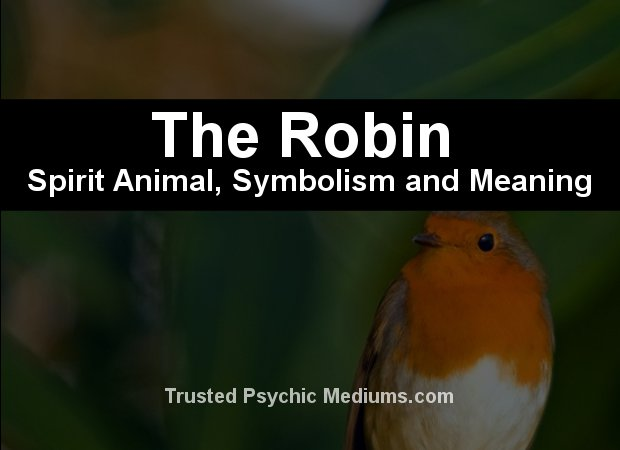 robin spirit animal meaning