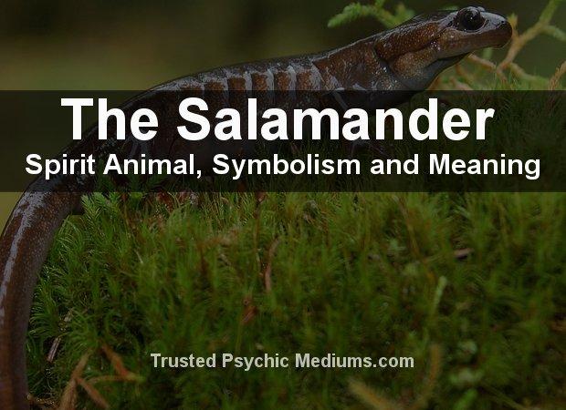 The Salamander Spirit Animal