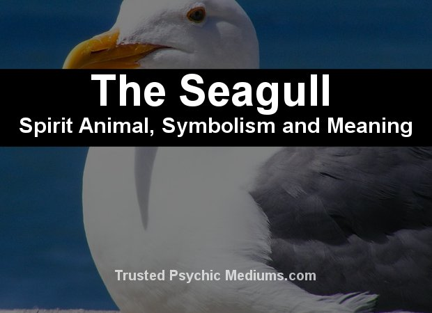 The Seagull Spirit Animal