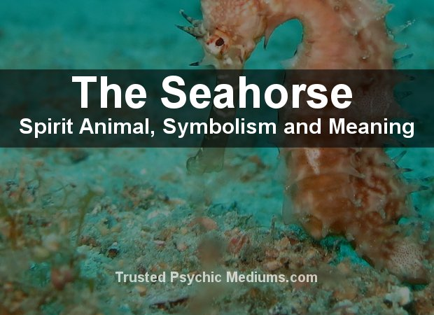 Seahorse Spirit Animal