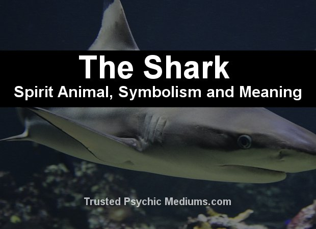 The Shark Spirit Animal