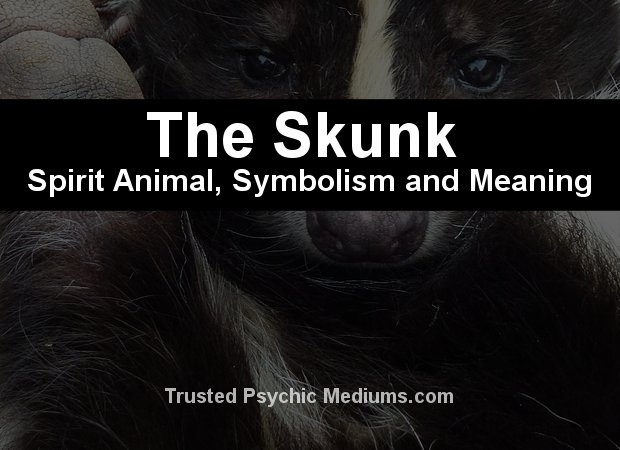 The Skunk Spirit Animal