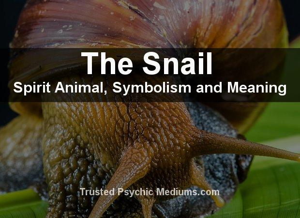 Snail Spirit Animal
