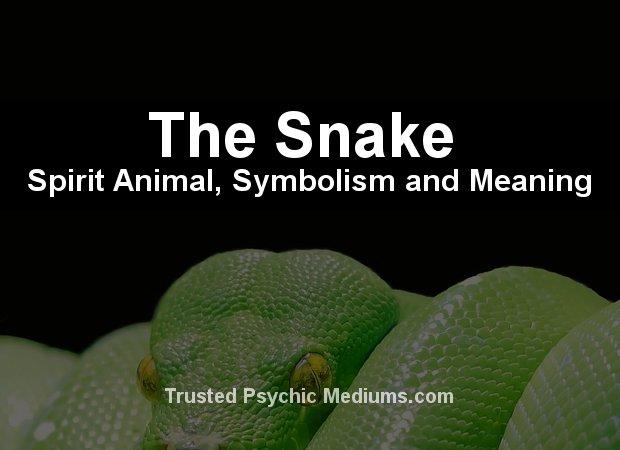 snake spirit animal
