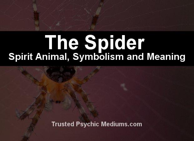 The Spider Spirit Animal