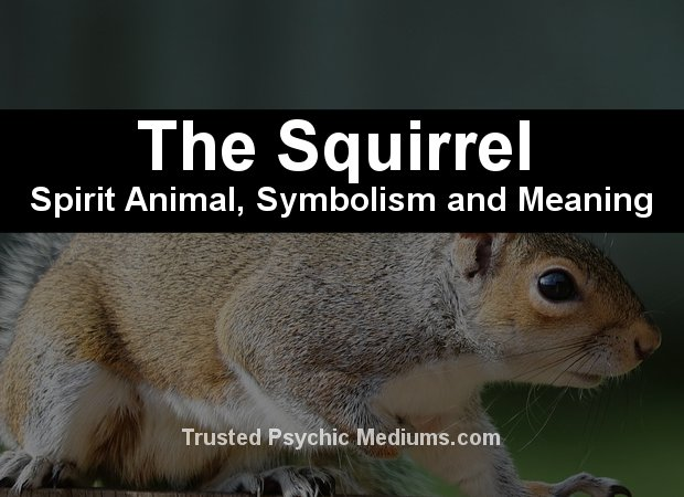 squirrel spirit animal