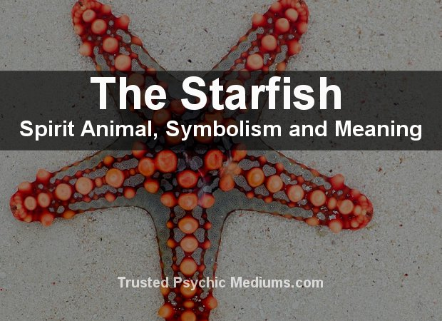 Starfish Spirit Animal
