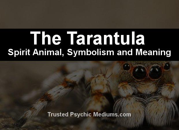 tarantula spirit animal