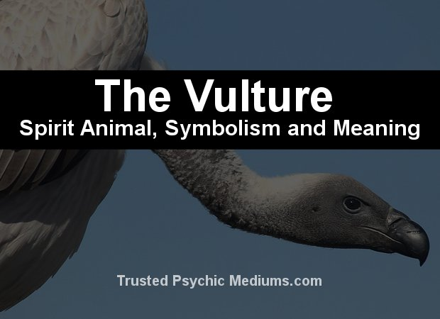 vulture spirit animal