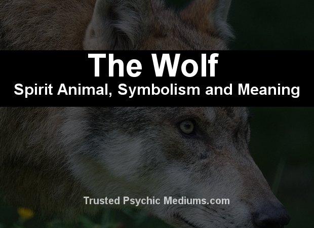 The Wolf Spirit Animal
