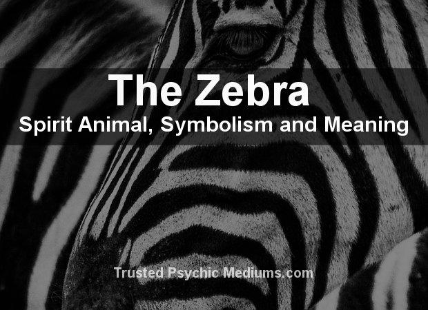 Zebra Spirit Animal